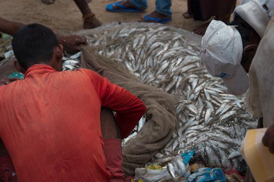 Vismarkt ergens onderweg  Verse lading uit de zee-0590