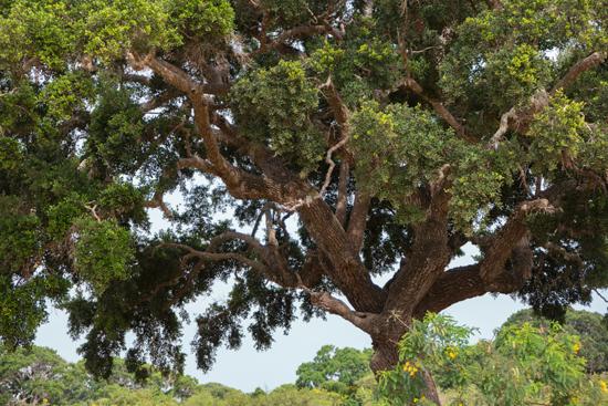 Yala National Park Visarend .. even zoeken-1040