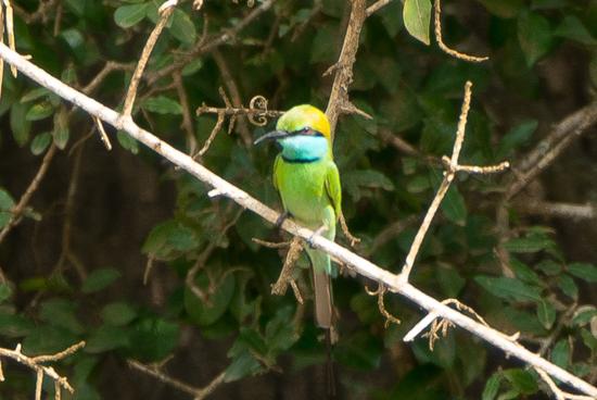 Yala National Park Bijeneter-1050