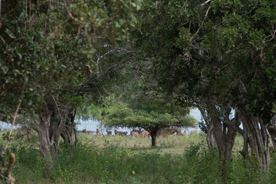 Yala National Park Axisherten langs het water-1060