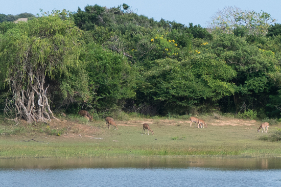 Yala National Park-1170