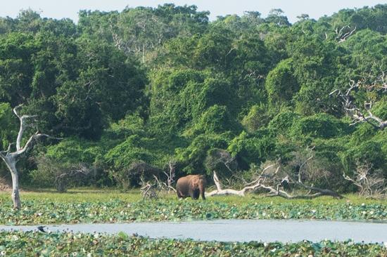 Yala National Park Olifant-1230