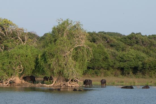 Yala National Park-1310