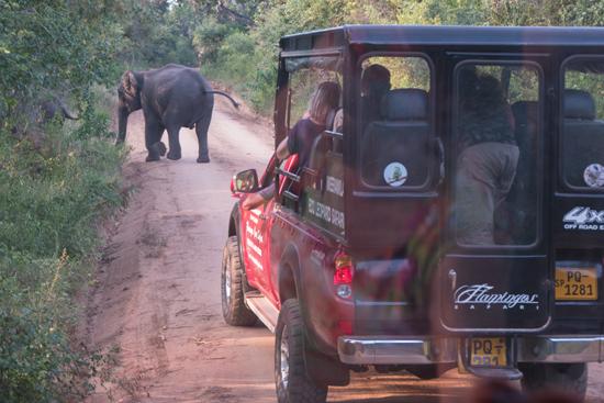 Yala National Park Overstekend wild-1330