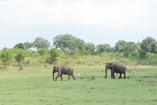 Udawalawe National Park-1400
