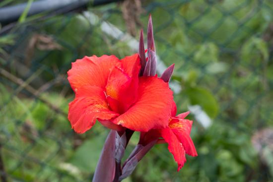 Mooie bloementuin tijdens lunchstop op weg naar Nuwara-Eliya-1800