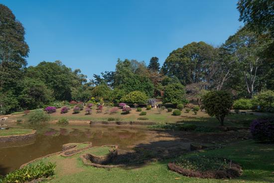 Kandy - Paradeniya Royal Botanic garden-2050