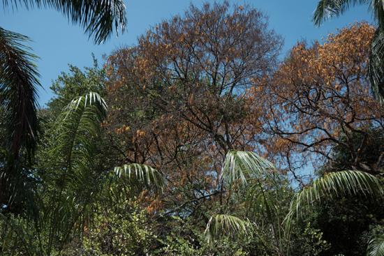 Kandy - Paradeniya Royal Botanic garden-2180