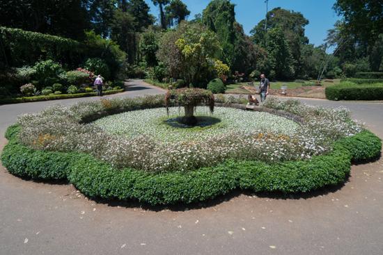 Kandy - Paradeniya Royal Botanic garden  Mooi begroeide vijverpartij-2250