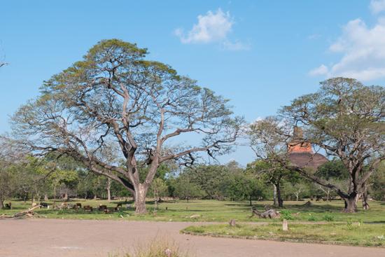 Mihintale - Anuradhapura-3360