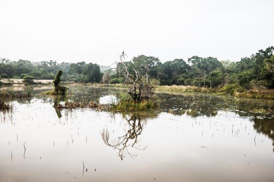 Wilpattu National Park-3390