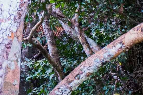 Wilpattu National Park  Het heeft kop nog staart op de foto maar het is toch echt een luipaard-3460