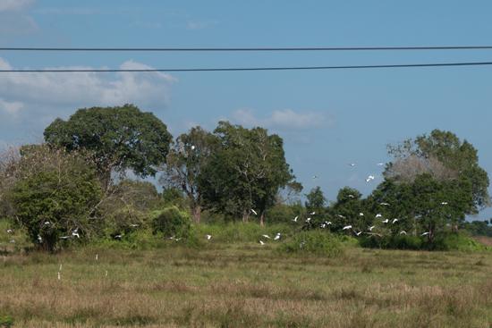 Onderweg naar Jaffna-3480