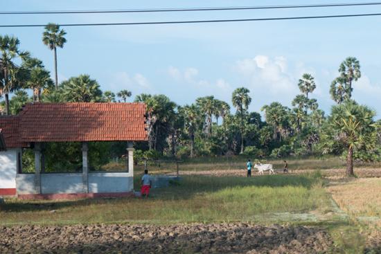 Onderweg naar Jaffna-3520
