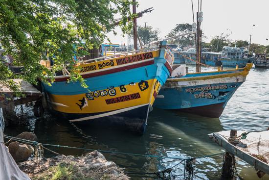 Negombo Vissershaven-4140