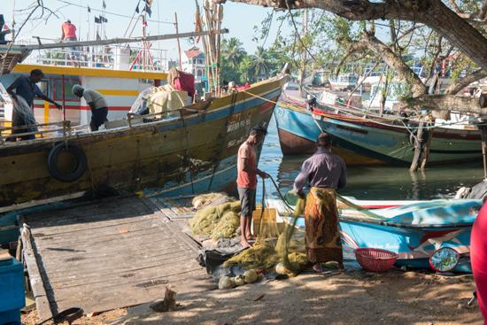 Negombo Vissershaven-4190