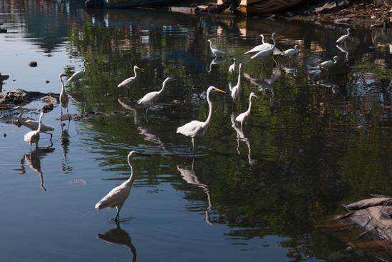 Negombo Vissershaven-4200