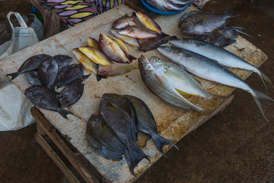 Negombo Vismarkt-4210