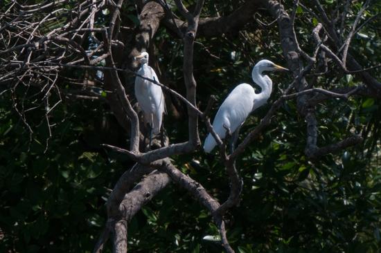 Negombo Boottocht -4310