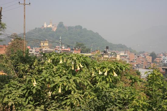 Swayambhunath tempel ( Monkey tempel) bovenop de berg Kathmandu-0050
