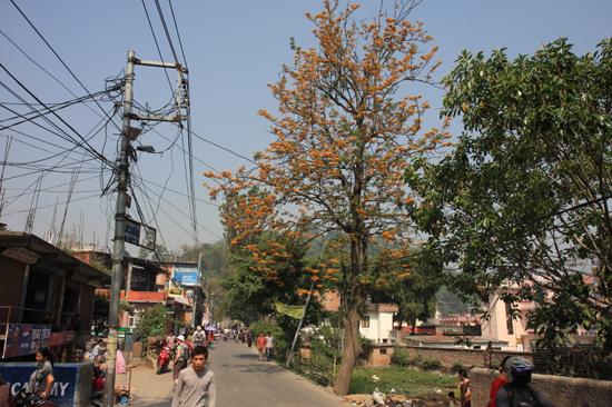Prachtige kleurige bomen in Kathmandu-0070