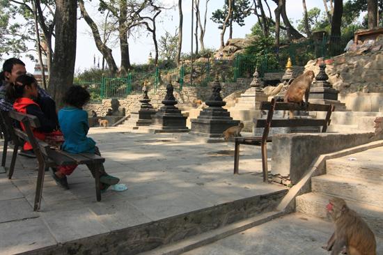 Apen bij de ingang van de Swayambhunath tempel (Apentempel - Monkey tempel) -0110