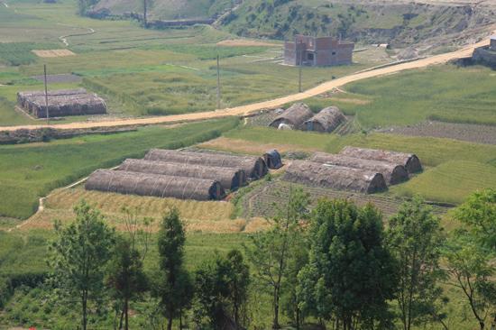 Champignon kwekerijen  in de Kathmandu vallei-0330